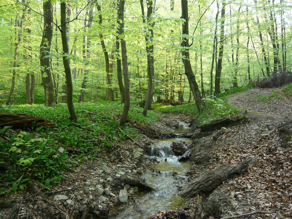 Botanische Spaziergaengeat Thema Anzeigen Wien Ottakring